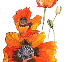 A party of poppies by LisaLeQuelenec