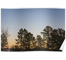Trees And Gradient Sunrise Poster