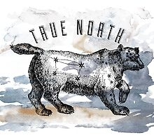 True North by Adam Excell