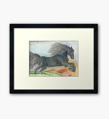 Majestic Arabian in Pencil Framed Print
