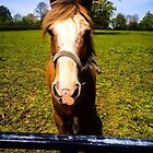 Horse by Selena Chaplin