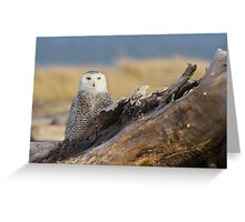 Snowy Owl in Evening Light Greeting Card