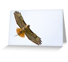 Red-tailed Hawk with Snake Greeting Card