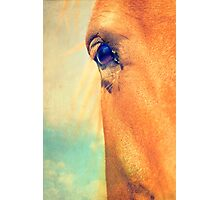 Horse Dreaming Photographic Print