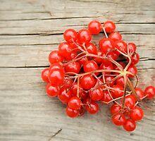 Red berries by SIR13