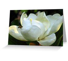 Magnolia Grandiflora Greeting Card
