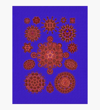 Red Melethallia on Bright Blue Photographic Print