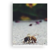 Bee Life Canvas Print