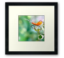 Ready to leap - assassin bug nymph Framed Print