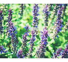 The Bee Photographic Print