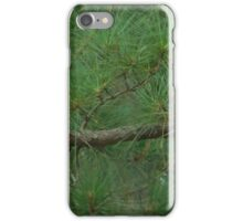 Bluejay on a Branch iPhone Case/Skin