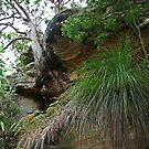 Kuringai National Park, NSW, Australia by Maggie Hegarty