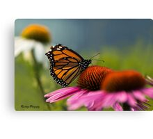 Monarch! Canvas Print