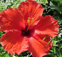 "In Bloom by Scott ""Bubba"" Brookshire"