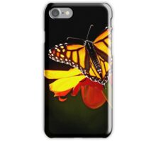 Monarch And Tithonia Light And Shadow iPhone Case/Skin