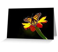 Monarch And Tithonia Light And Shadow Greeting Card