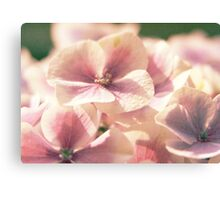 Pink Flowers are Beautiful [part 2] Canvas Print