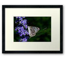 Butterfly Feeding Framed Print