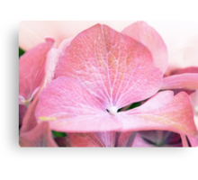 Pink Flowers are Beautiful [part 3] Canvas Print
