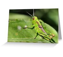 It's easy being green...it's camoflage in Iowa Greeting Card