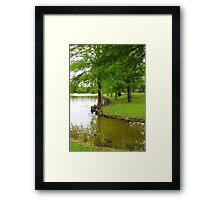 Cypress Knees Framed Print