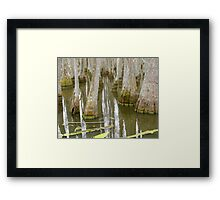 Bizarre Cypress Framed Print