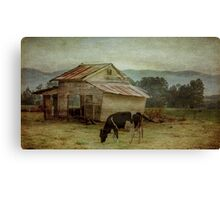 The Old Cow Shed Canvas Print