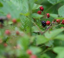 Wild Berries by Kayla Schroyer
