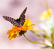 A Sip Of Coreopsis by Caitlyn Grasso