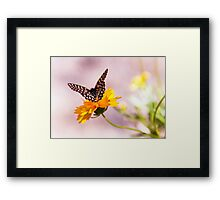 A Sip Of Coreopsis Framed Print