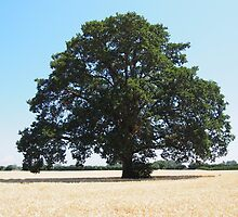 Lonely Tree in Hay Farm by organicmindset