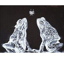 TWO FROGS,ONE FLY Photographic Print
