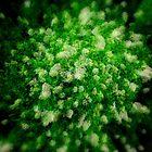 Virescent Green  by Michael Rubin