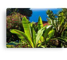 Sunny Plant/ Sunny Garden Canvas Print