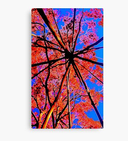 Looking Up Tarkeeth August 2016 Canvas Print