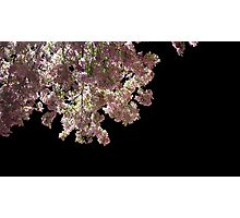 Cherry Blossoms in the Dark Photographic Print