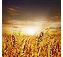 Love Of Farmer Photographic Print