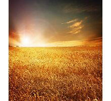 Love Field Photographic Print