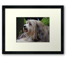Shaggy Dog Framed Print