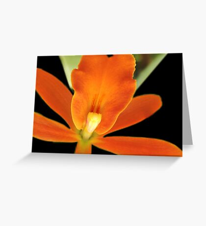 Carrot Top - Orchid Alien Discovery Greeting Card