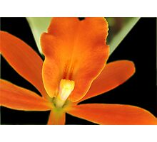 Carrot Top - Orchid Alien Discovery Photographic Print