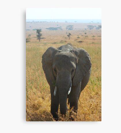 Elephant in the Serengeti Canvas Print