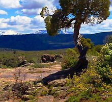 Utah Juniper at the Black Canyon by Roger Passman