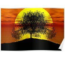 arbre sous la lumiere du soleil2 Poster
