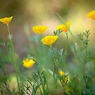 Yellow Poppies by Rebecca Cozart