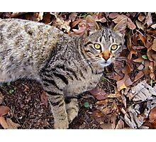 Cute Kitty Photographic Print