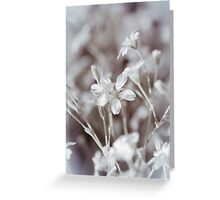 Faded In Bloom Greeting Card