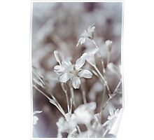 Faded In Bloom Poster