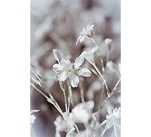 Faded In Bloom Photographic Print
