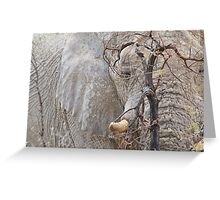 Elephant Tranquility - African Wildlife Wonder Greeting Card